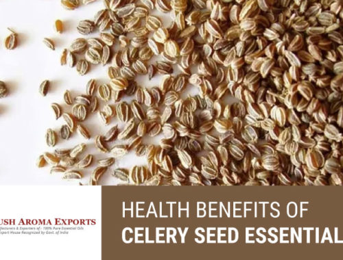 health-benefits-of-celery-seed-essential-oil