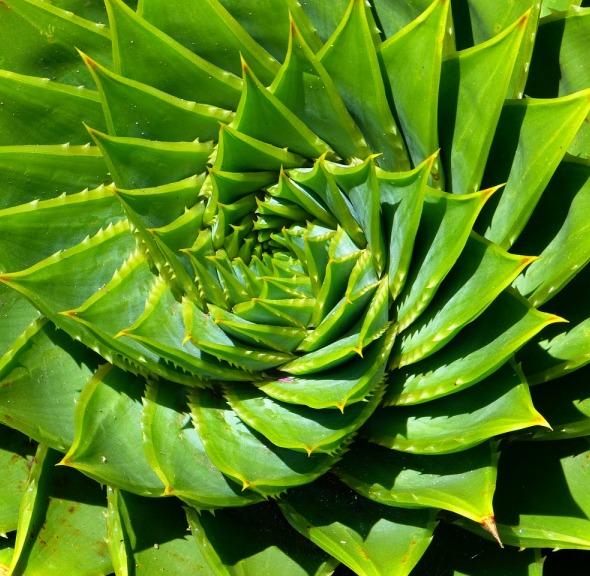 Aloe Vera Oil 5
