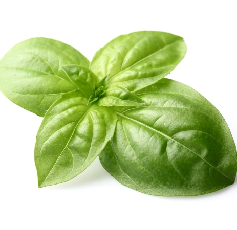 Basil Sweet Essential Oil India 5
