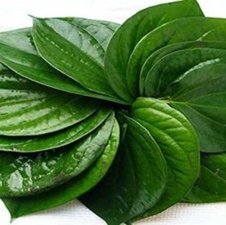 Betel Leaf Essential Oils 3