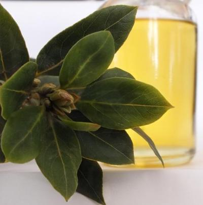 Laurel Leaf Essential Oil 4