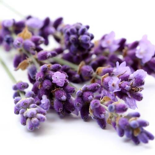 Lavender (true) French oil - Certified Organic  2