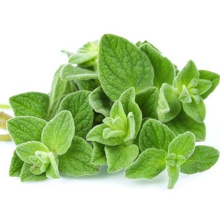 Oregano Organic Essential Oil 4