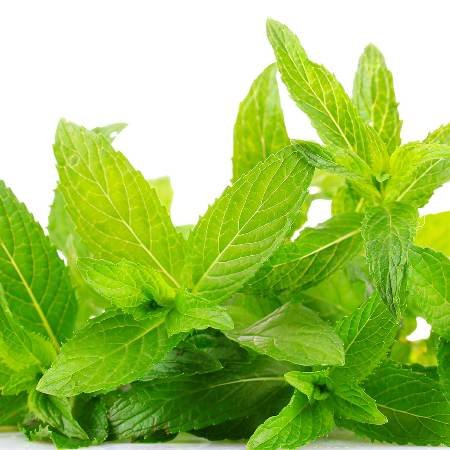 Spearmint Organic Essential Oil 4