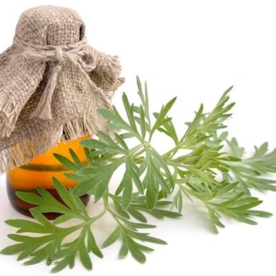 Wormwood Essential Oil 4