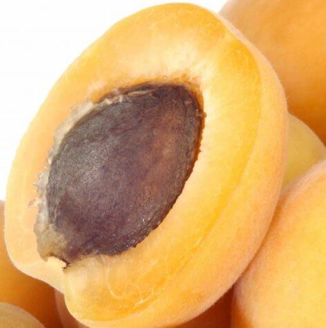 Apricot Kernel Carrier Oil - Cosmetic Grade - Refined 4
