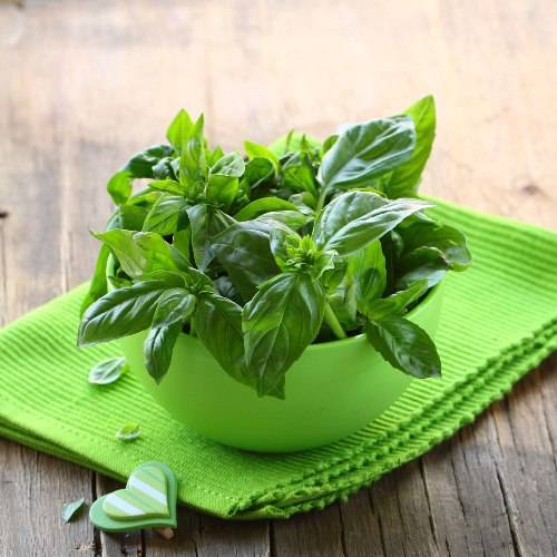 Basil Oil - Certified Organic  4