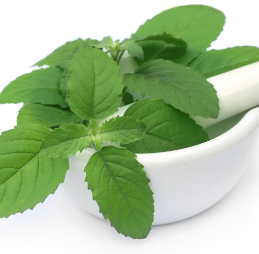 Basil Sweet Essential Oil India 3