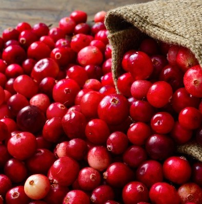 Cranberry Seed Oil  5
