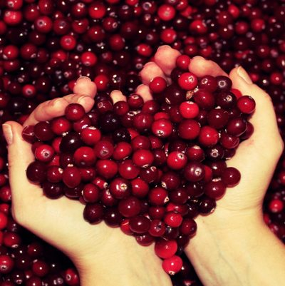 Cranberry Seed Oil  3