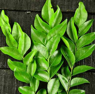 Curry Leaf Natural Essential Oils 4