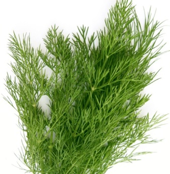 Dill Weed Organic Essential Oil 3