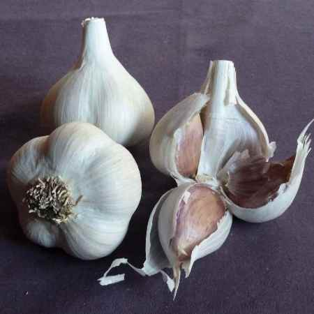 Garlic Essential Oil 3
