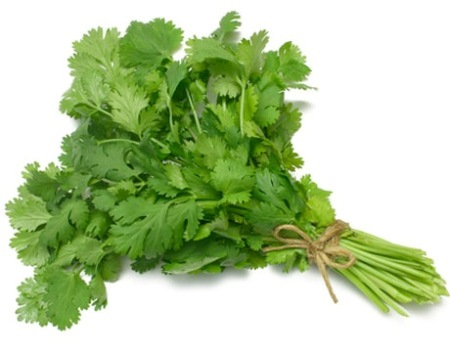Coriander Essential Oil Egypt 2