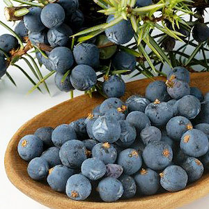 Juniper Berry Essential Oil Slovenia 2