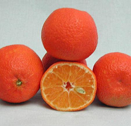 Mandarin Sicily Essential Oil 4