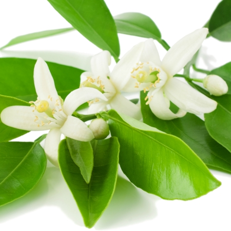 Neroli Natural Blend Essential Oil 3