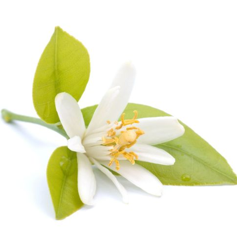 Neroli Egypt Essential Oil 3