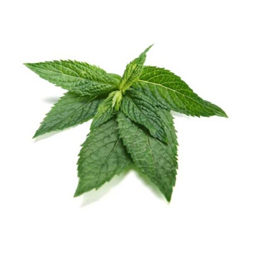 Peppermint Therapeutic Grade Essential Oils 3