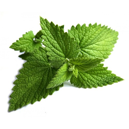 Peppermint Therapeutic Grade Essential Oils 5