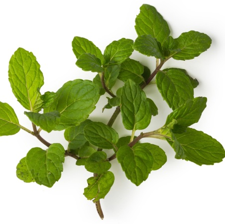 Peppermint Supreme Natural Essential Oil 5