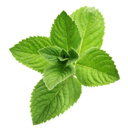 Peppermint Essential Oil Japanese 4