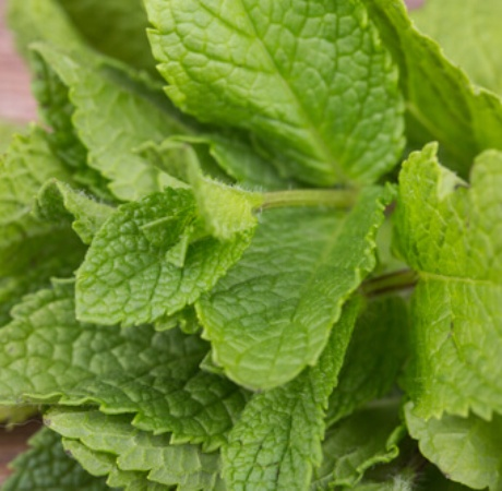 Peppermint Essential Oil Japanese 3