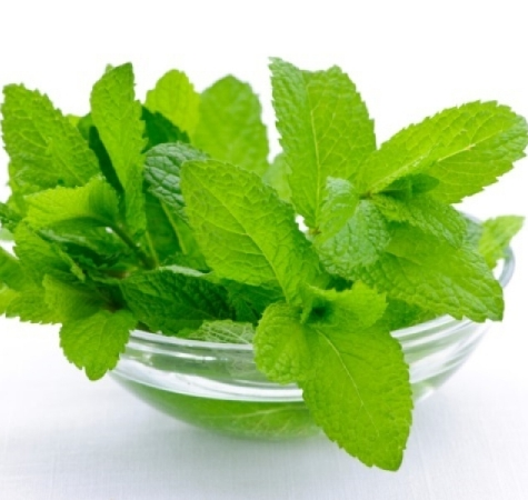 Peppermint Essential Oil Japanese 2