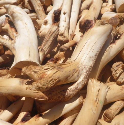 Sandalwood Essential Oil 3