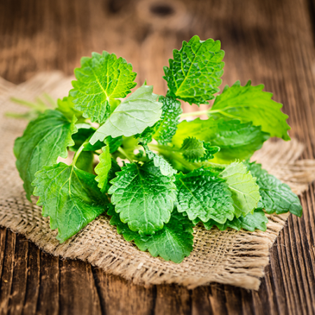 Spearmint India Essential Oil 3
