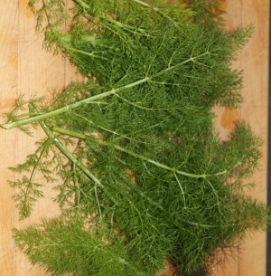 Fennel Sweet Essential Oil 5
