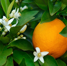 Neroli Pure & Natural Floral Waters