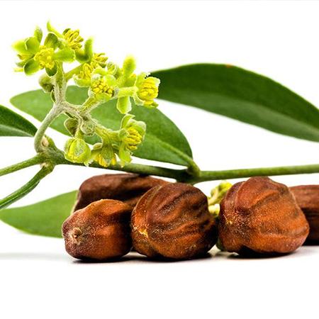 Jojoba Golden Organic Cold Pressed Carrier Oils