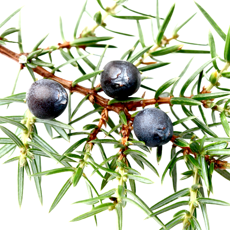 Juniper Berry Essential Oil Slovenia