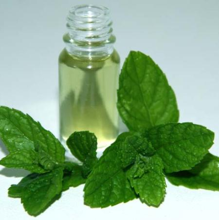L-CARVONS 55% & 60%  Peppermint Essential Oils