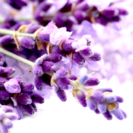 Lavender Essential Oil 40/42 1