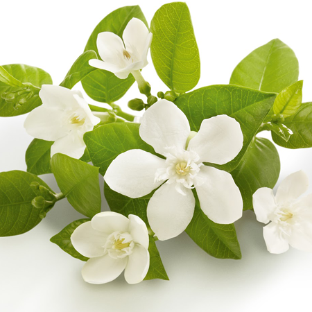 Neroli Natural Blend Essential Oil 1