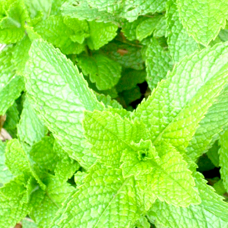 Peppermint Essential Oil Supreme