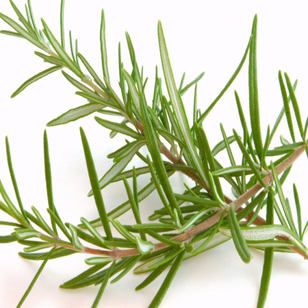 Rosemary Hydrosol Pure & Natural Floral Waters