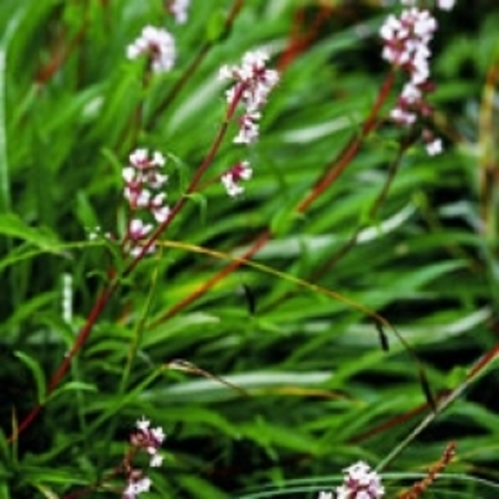 Spikenard Pure Floral Waters