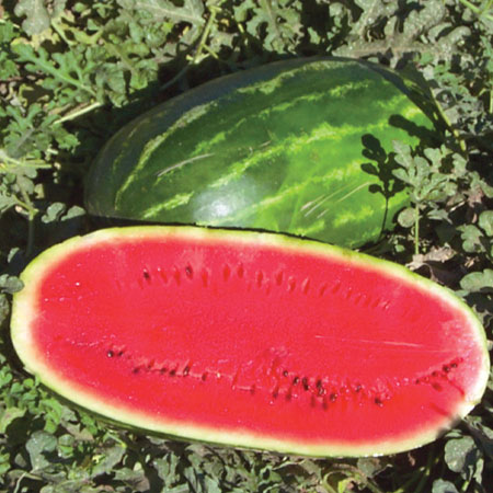 Water Melon Oil