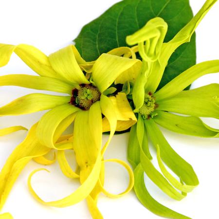 Ylang Ylang oil - 1st Grade - Certified Organic