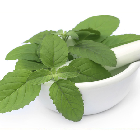 Indian Basil Peppermint Essential Oils