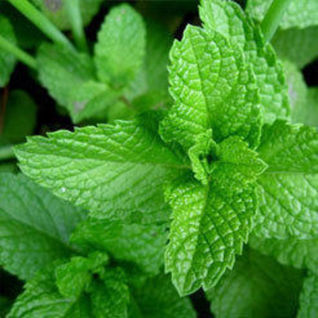 ISO Menthone Peppermint Essential Oils
