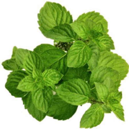 L-Menthol 38-40% TMC 50% Peppermint Products Oils