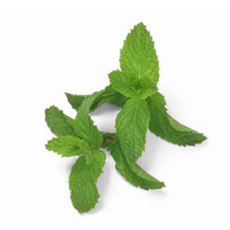 Menthone Natural Crude Peppermint Oils 95% & 98%