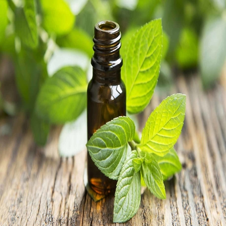Peppermint Oil 95%