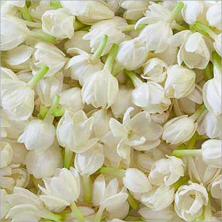 Jasmine Auriculatum Pure Floral Absolute Oil