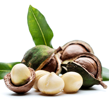 Macadamia Nut Organic Carrier Oil