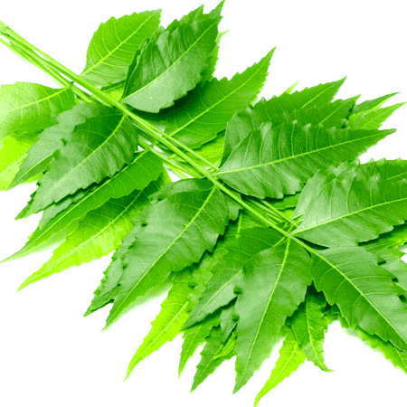 Neem Natural Essential Oil